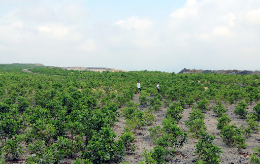 Dự kiến trồng 148 ha rừng hoàn nguyên môi trường trong năm 2020